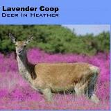 Album cover parody of Dear Heather by Leonard Cohen