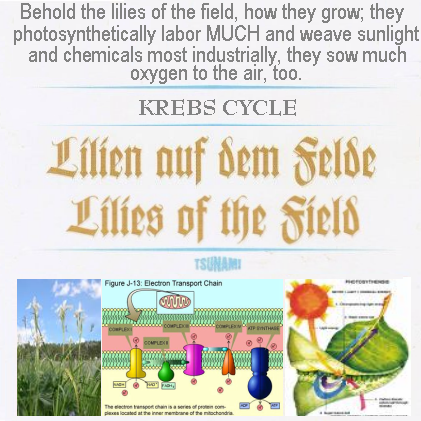 Album cover parody of Lilies of the Field by Soundtrack